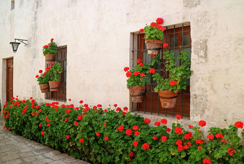 The narrow alley full of red flowering shrubs and planters hanging on the old building`s window, Monastery of Santa Catalina, Peru royalty free stock image