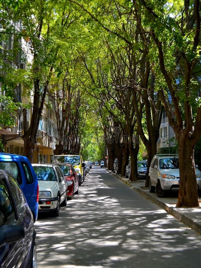 Narrow city street with cars parked on the roadside under the canopy of green trees is flooded with summer afternoon sunlight. And shadows vertical frame royalty free stock images