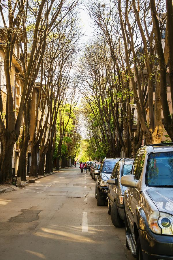 Narrow city street with a lot of cars parked on the roadside under the canopy of old trees on a sunny spring day. Dimension. Perspective, vertical frame stock photo