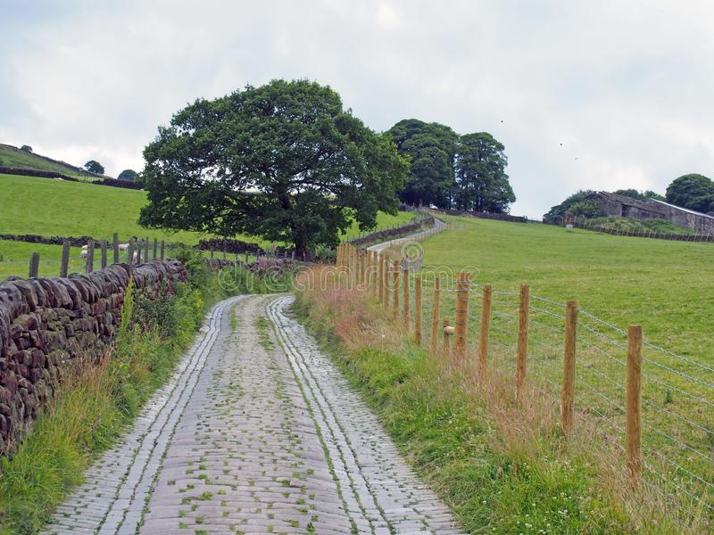 Narrow cobble stone winding country lane surrounded by stone walls fences trees and green fields in west yorkshire countryside. A narrow cobble stone winding stock image