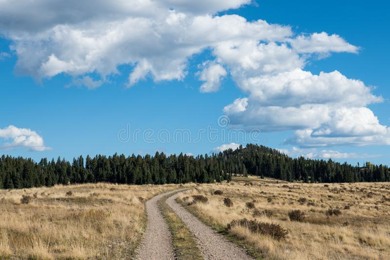 Narrow country dirt road curving through a grassy field towards a pine and spruce forest in New Mexico. Ranch road with two tracks curving through ranch land stock photo
