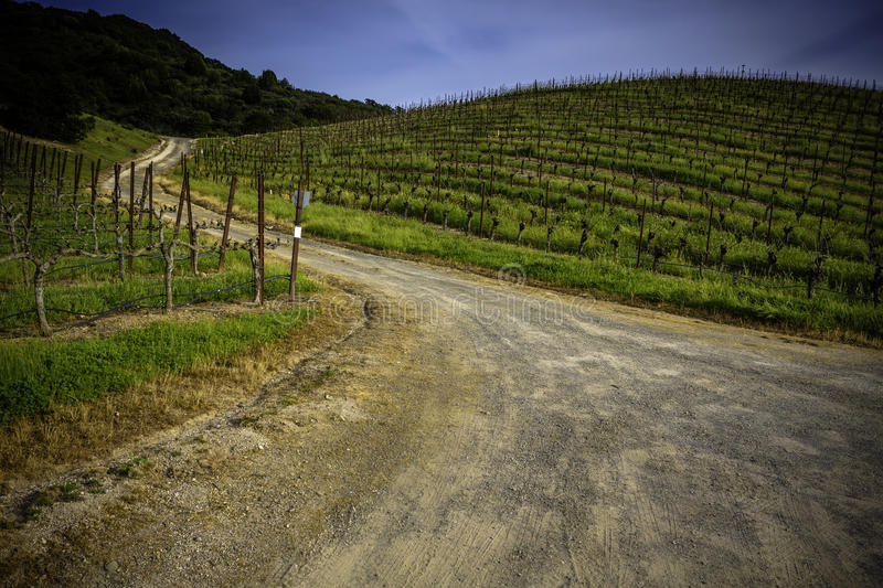 Narrow country road winds among hills of grapevines in California stock image