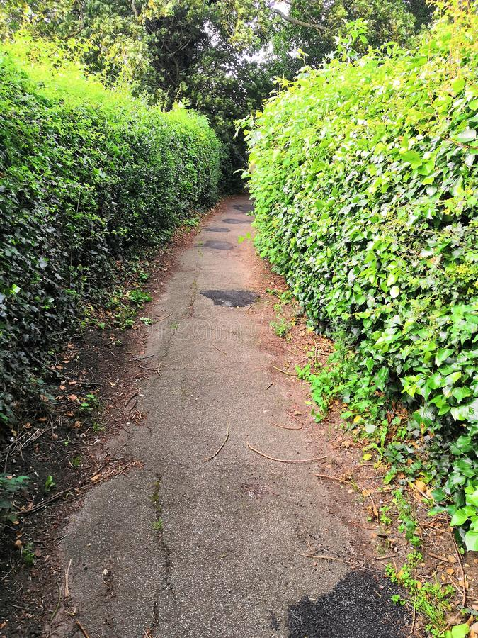 Narrow footpath to nowhere surrounded by green hedges royalty free stock image