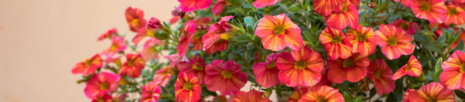 Narrow image of red flowers royalty free stock photography
