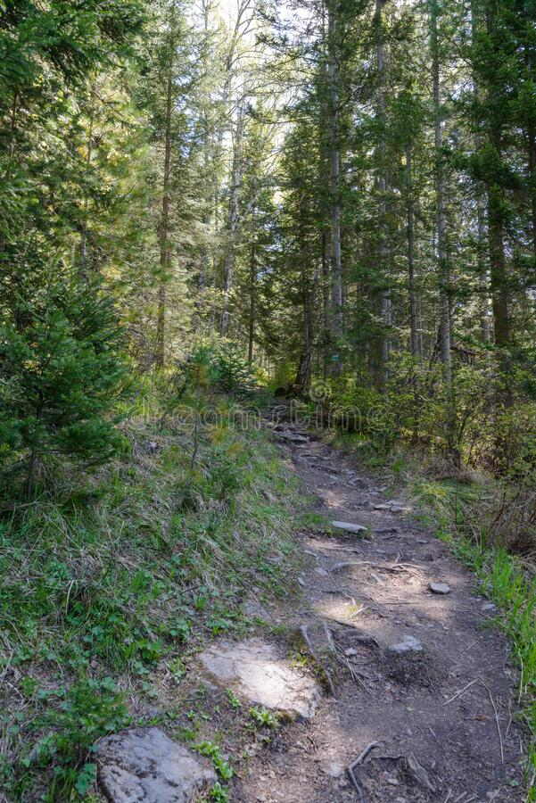 Narrow mountain trail passing through the forest royalty free stock photo