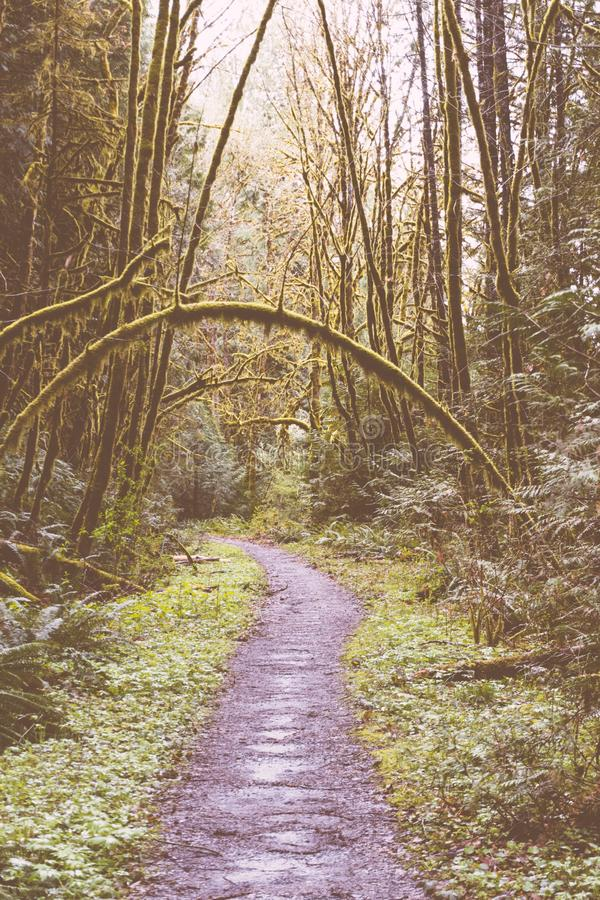 Narrow muddy pathway in a forest royalty free stock image