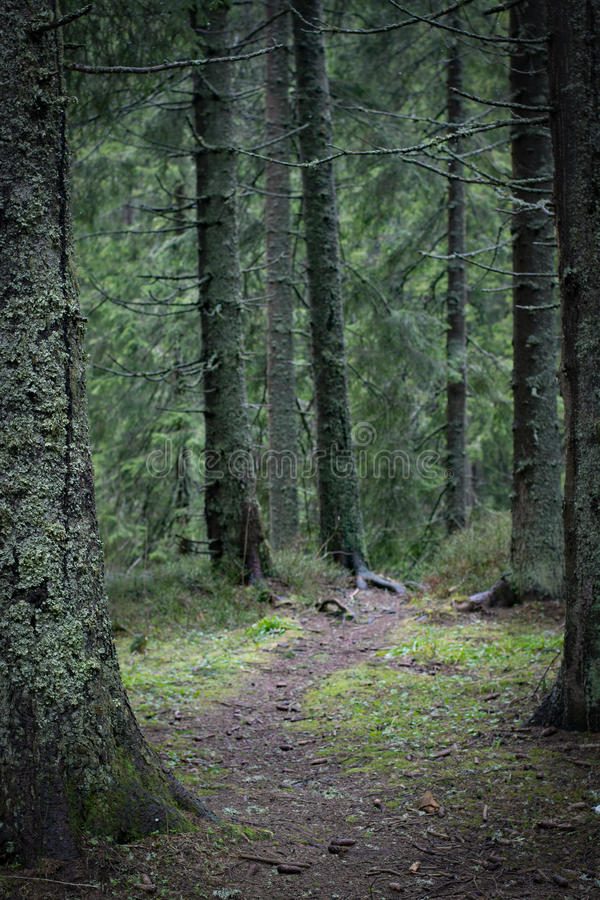 Narrow path in dark forest stock image