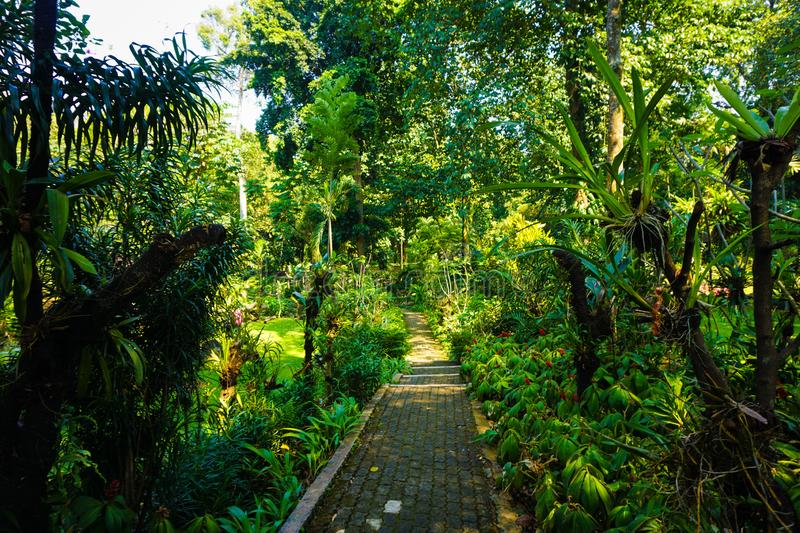 Narrow path with pavement in the middle of tropical jungle forest in botanical garden in bogor indonesia. Photo stock photos