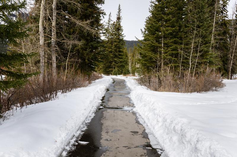Empty Paved Path in a Winter Wooded Landscape. Narrow Path Through a Snowy Wood on a Winter Day. Banff, AB, Canada royalty free stock photos