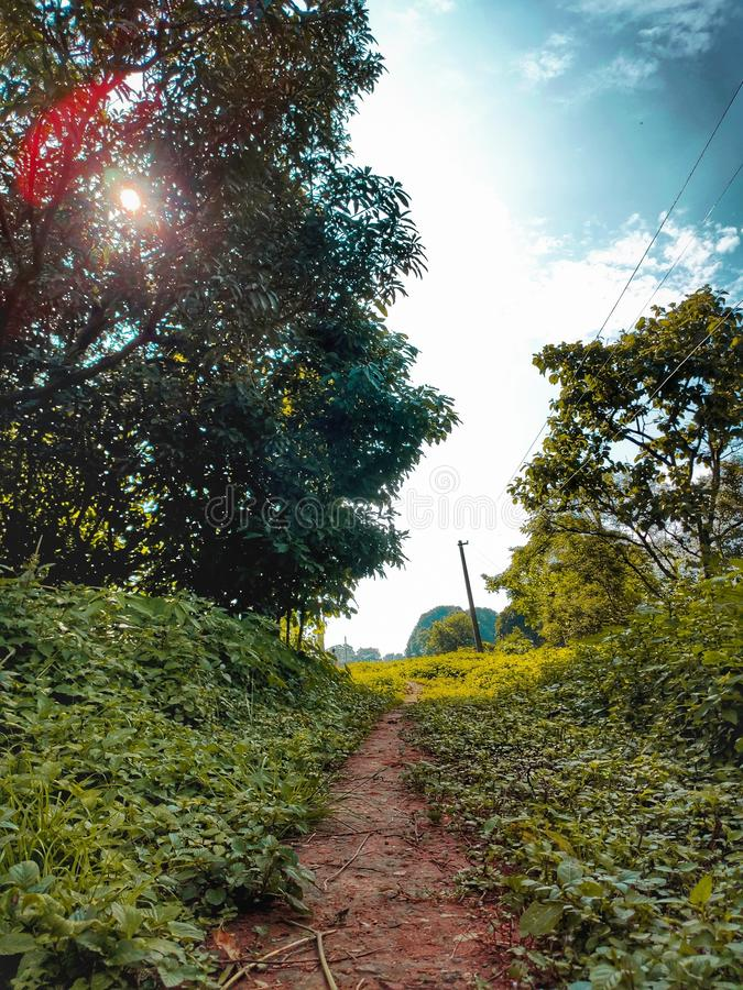Narrow path way between the bushes and trees lonely road royalty free stock photos