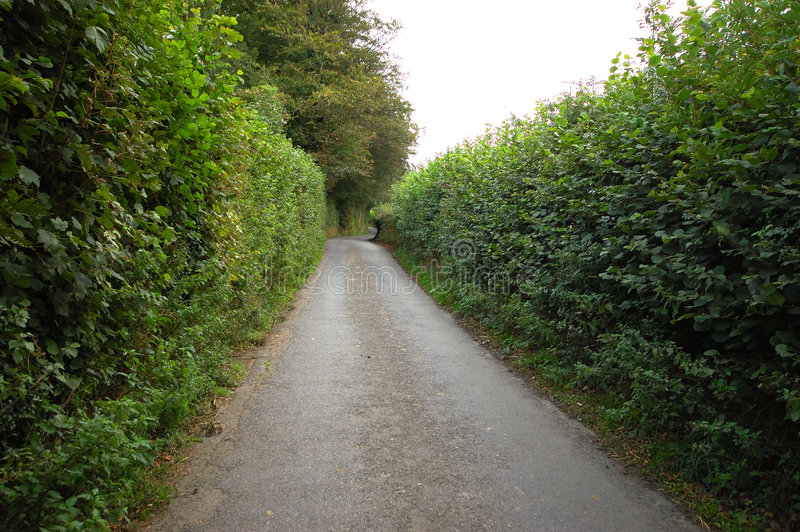 Narrow Road Through High Hedge stock photo