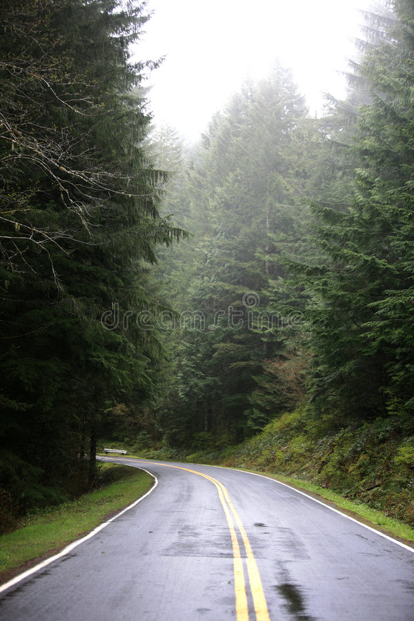 Free Narrow Road In The Forest Stock Image - 2939921