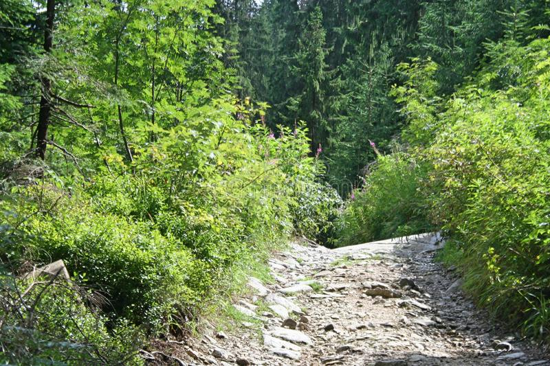 A narrow road made of stones in the Tatra Mountains. There are lots of greenery around stock photos
