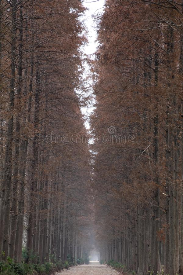 A narrow road in winter royalty free stock images