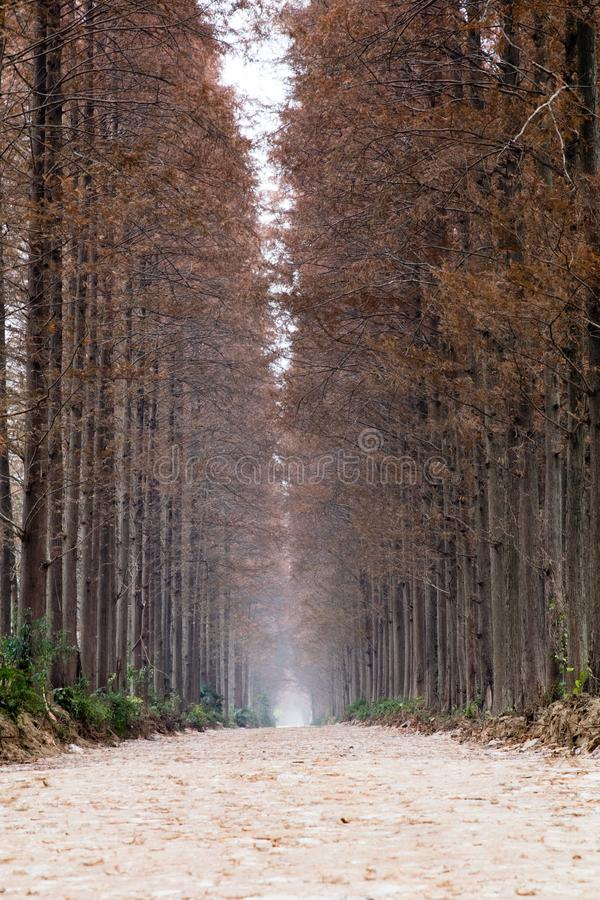 A narrow road in winter stock photography