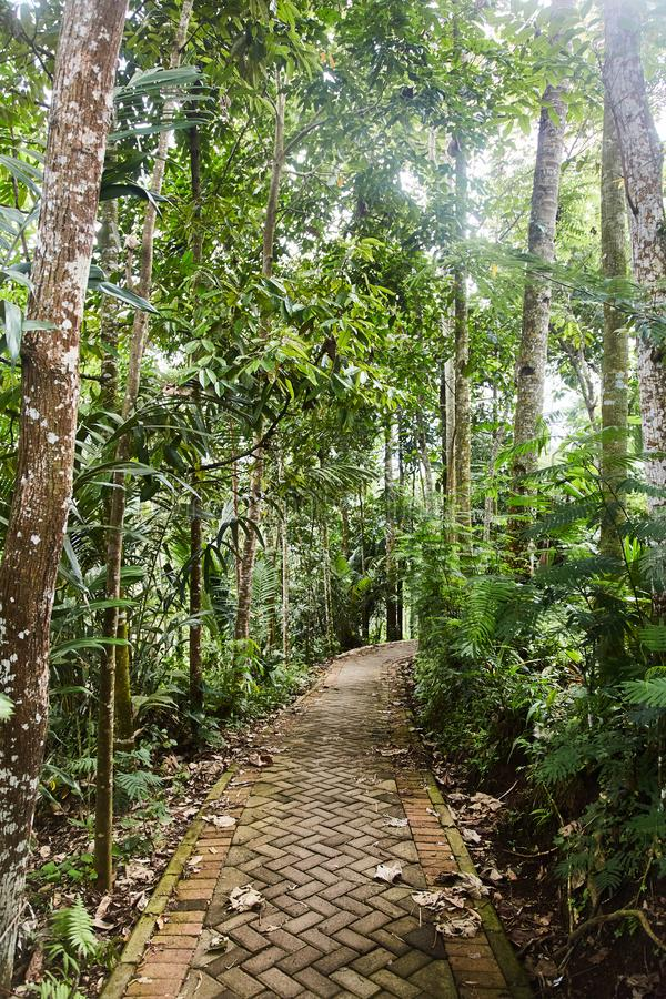Narrow rocky path in the jungle royalty free stock photo