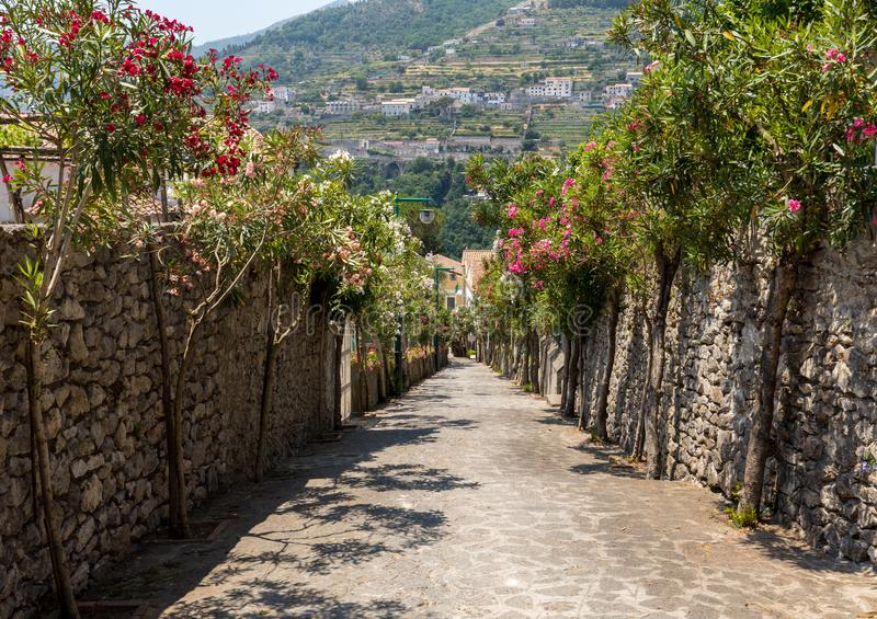A narrow steep street with blooming oleanders in Ravello. Amalfi Coast. stock image