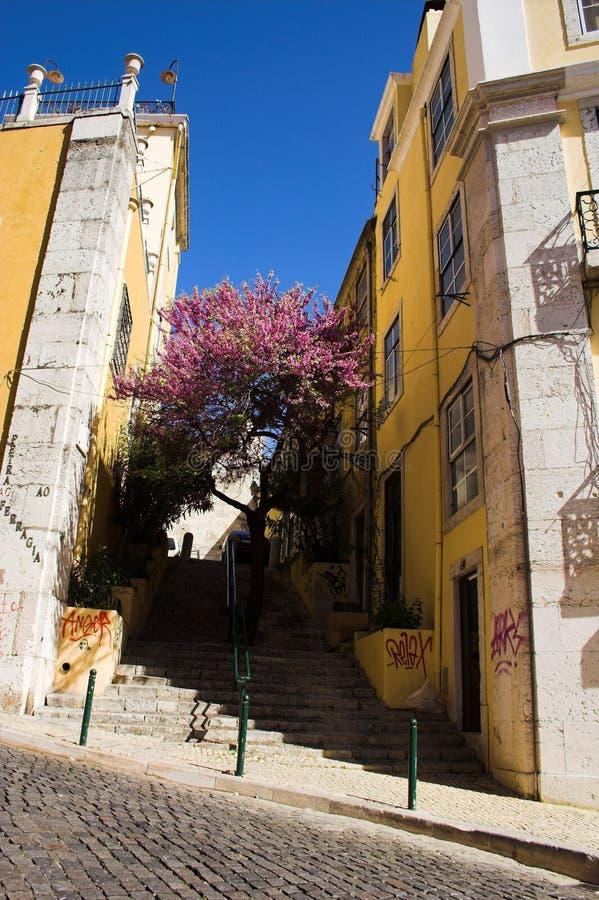 Download Narrow street stock photo. Image of path, houses, beautiful - 4657616