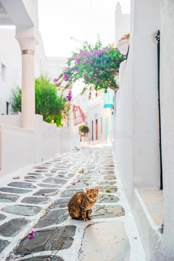 The narrow streets of greek island with cat. Beautiful architecture building exterior with cycladic style. The narrow streets of the island with blue balconies stock image