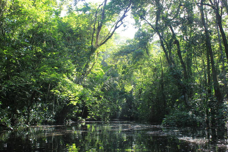 Narrow tropical forest canal. In tortuguero costa rica royalty free stock images