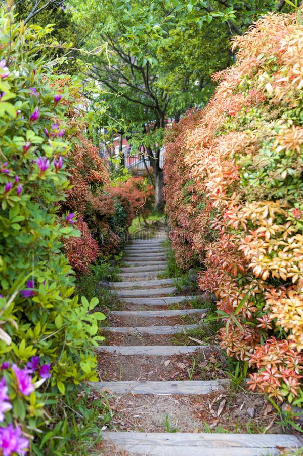 Narrow walkway in lush colorful garden royalty free stock images