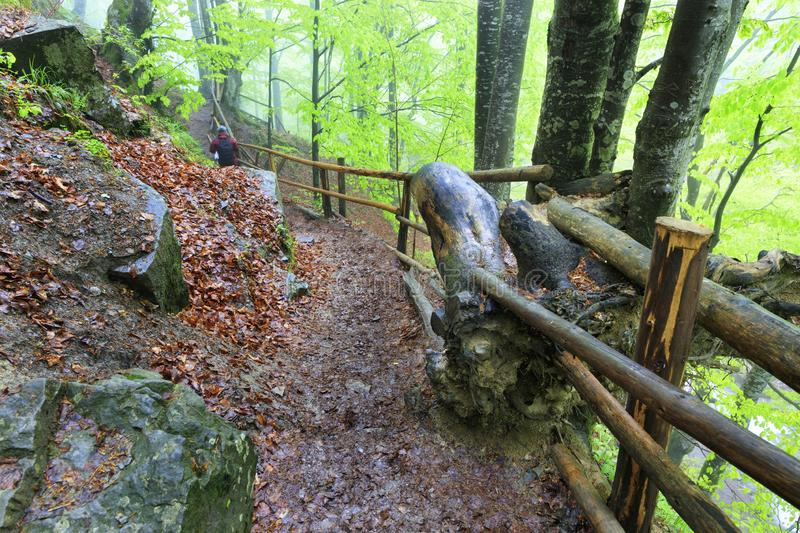 Narrow and wet steep mountain path in the forest with thick fog and with old railing stock photo