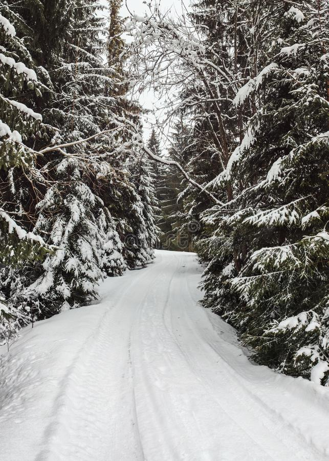 Narrow winter forest road covered with snow with trees. On both sides stock images