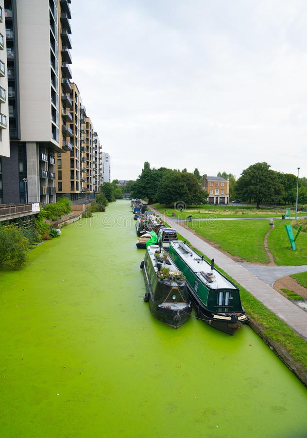 Narrowboats moored along algae covered Regents Canal, London wit stock photos