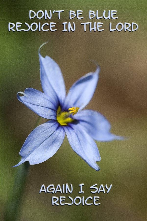 Narrowleaf är blåögt gräs inte blått jublar i Herren royaltyfri illustrationer