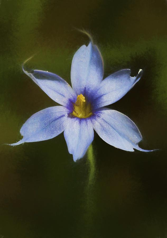 Narrowleaf blåögt gräs - Sisyrinchiumangustifolium royaltyfri foto