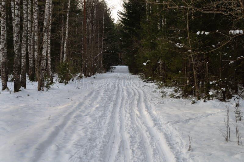 NARTA ślada W zima lesie obrazy stock