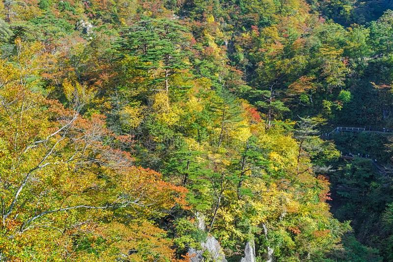 Naruko Gorge in autumn, Japan royalty free stock photo