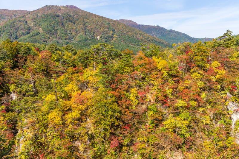 Narukokloof in de herfst stock fotografie