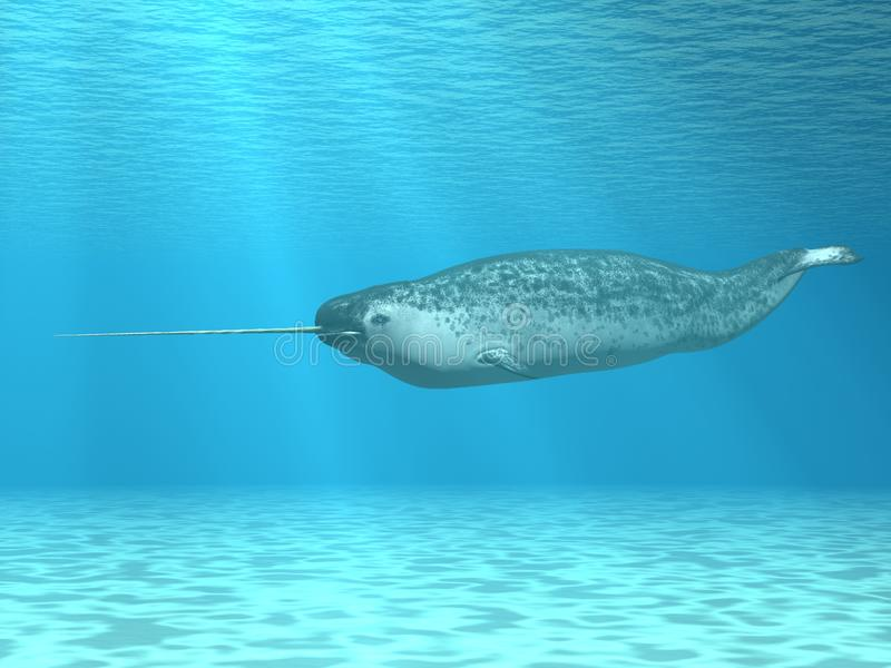 Narwhal. 3 D Computer Render of an Narwhal