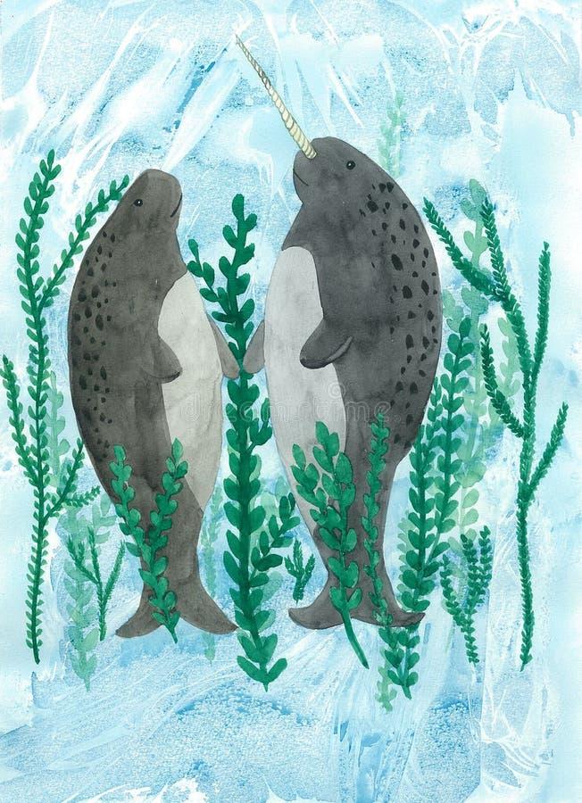 Narwhals jednorożec ryba obraz stock