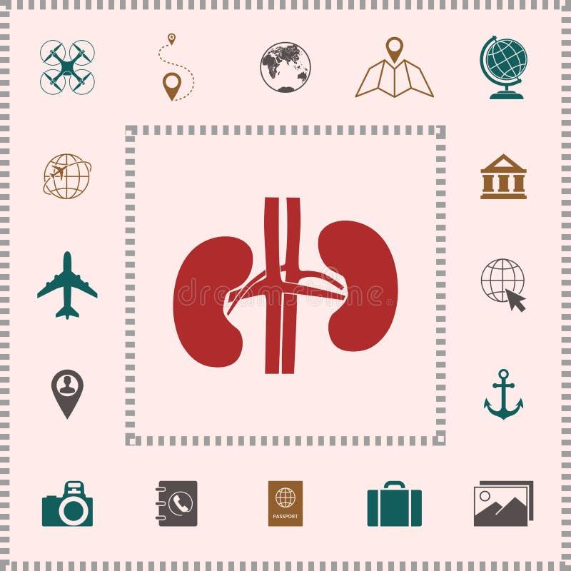 narządów ludzkich Cynaderki ikona ilustracji