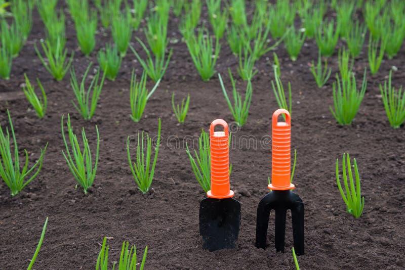 narzędzia pracy w ogrodzie fotografia royalty free