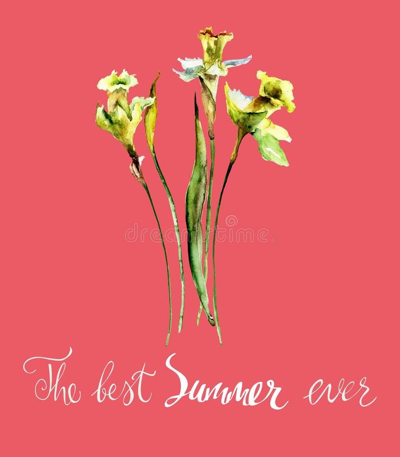 Narzisse blüht mit Titel der beste Sommer überhaupt stockbild