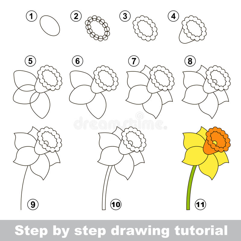Narzisse Zeichnendes Tutorium stock abbildung