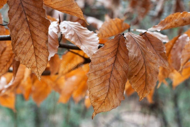 Nasłoneczneni pomarańcze i brązu jesieni liście zdjęcie royalty free