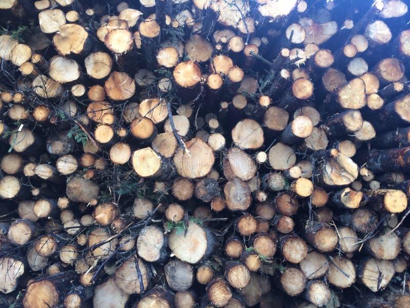 Nas madeiras fotos de stock