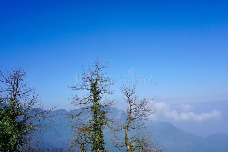 Nas montanhas sob o céu azul, algumas árvores inoperantes cercam a videira verde fotografia de stock
