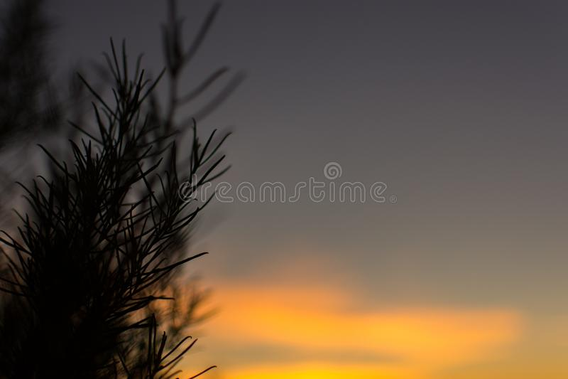 Nascer do sol adiantado em Uluru fotografia de stock