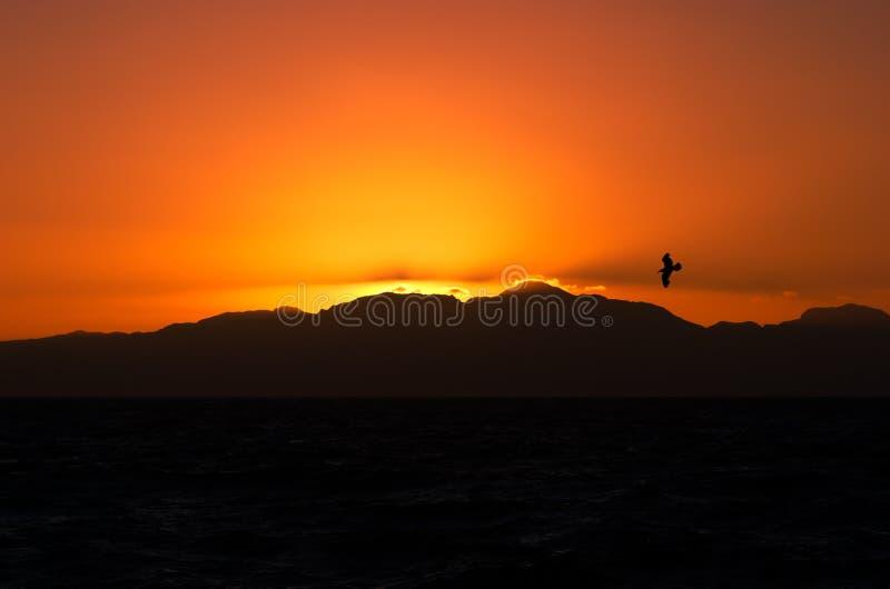 Nascer do sol alaranjado com pássaro foto de stock