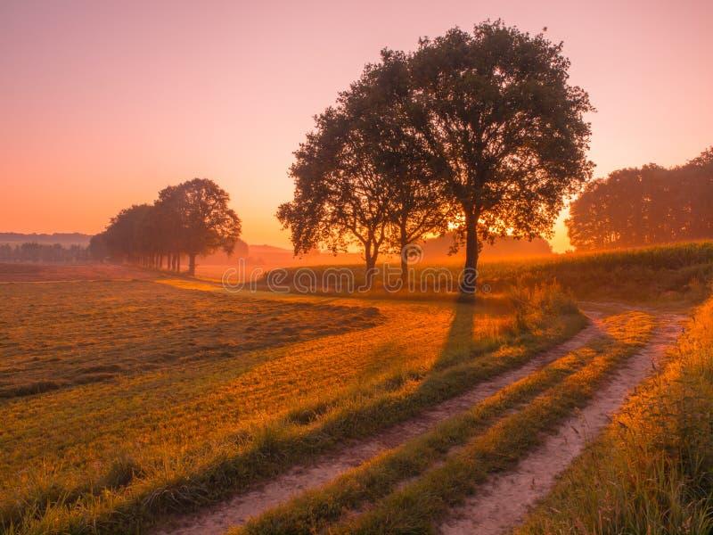 Nascer do sol alaranjado e cor-de-rosa sobre a paisagem rural perto de Nijmegen fotografia de stock royalty free