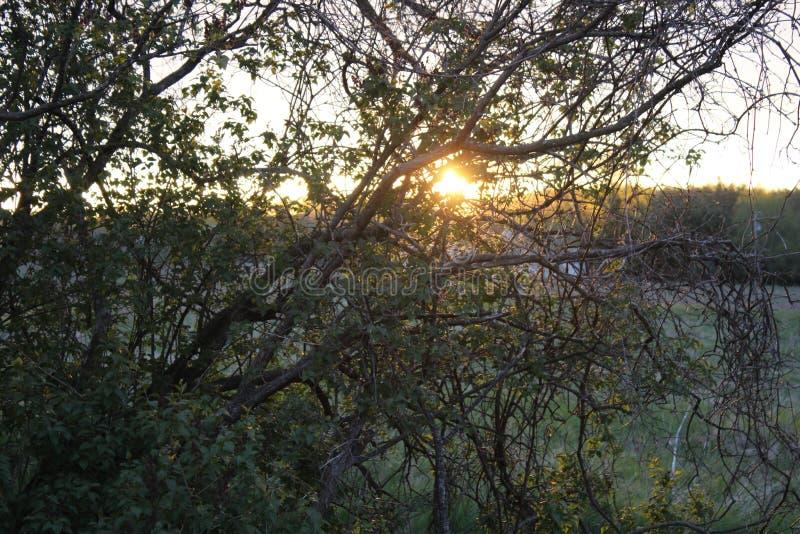 Nascer do sol através das árvores foto de stock