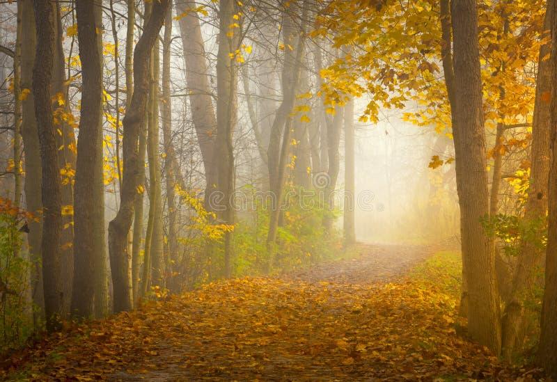 Nascer do sol bonito de Ohio na floresta fotos de stock royalty free