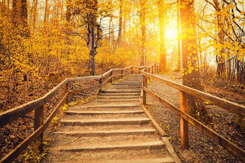 Nascer do sol bonito na floresta do outono imagem de stock royalty free