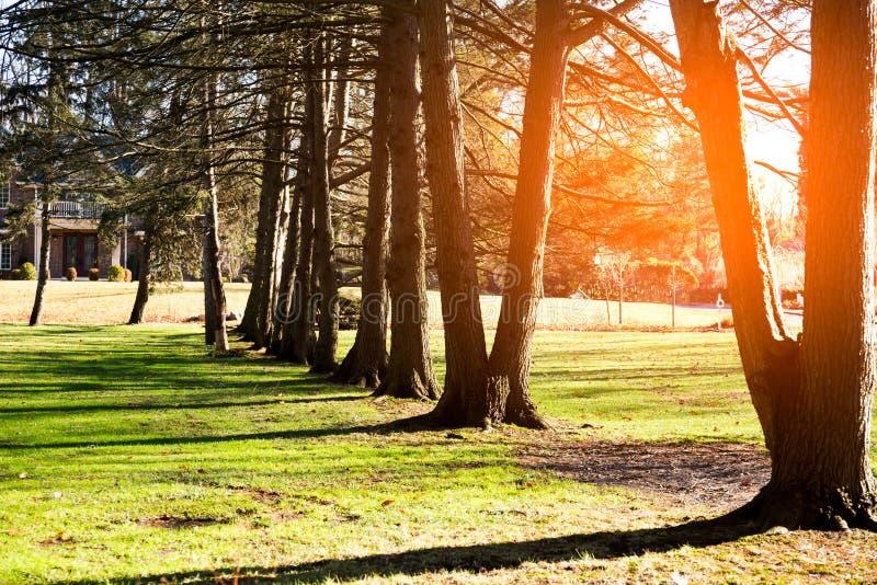Nascer do sol bonito na manhã e nas sombras da árvore mim imagens de stock royalty free