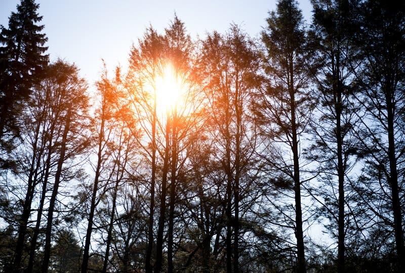 Nascer do sol bonito na manhã sobre a árvore no tempo de inverno fotos de stock